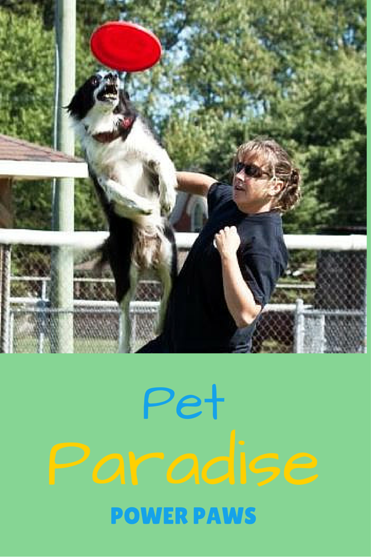 Pet Paradise Power Paws Show